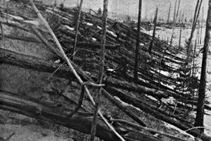 A picture of trees knocked down from the Tunguska Event in 1908.