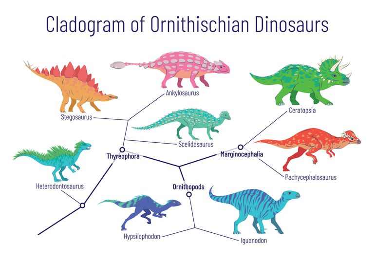 What Is a Cladogram? Definition and Examples