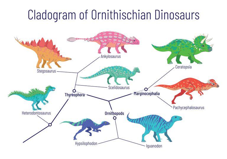 Ornithischian Dinosaur Cladogram
