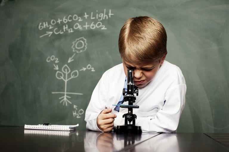I got Nice Job!. Biology Photosynthesis Quiz