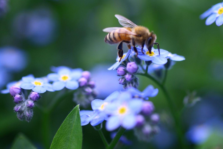 Beehive Magic