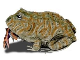 Beelzebufo ampinga, a frog from the Late Cretaceous of Madagascar, pencil drawing, digital coloring