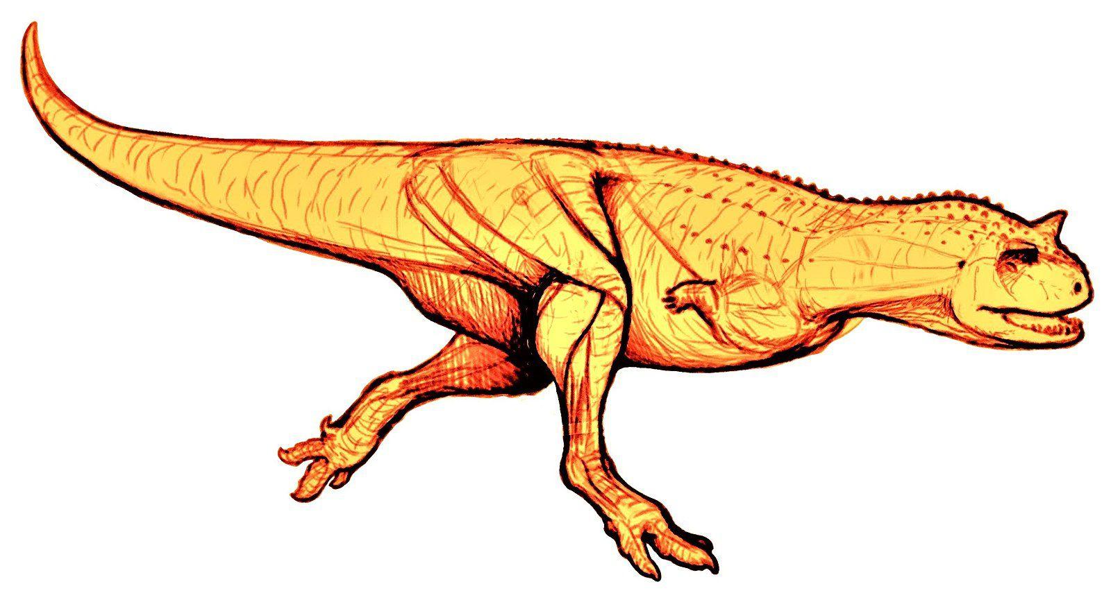 Carnotaurus illustration