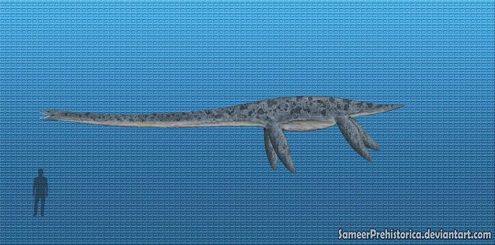 10 facts about elasmosaurus