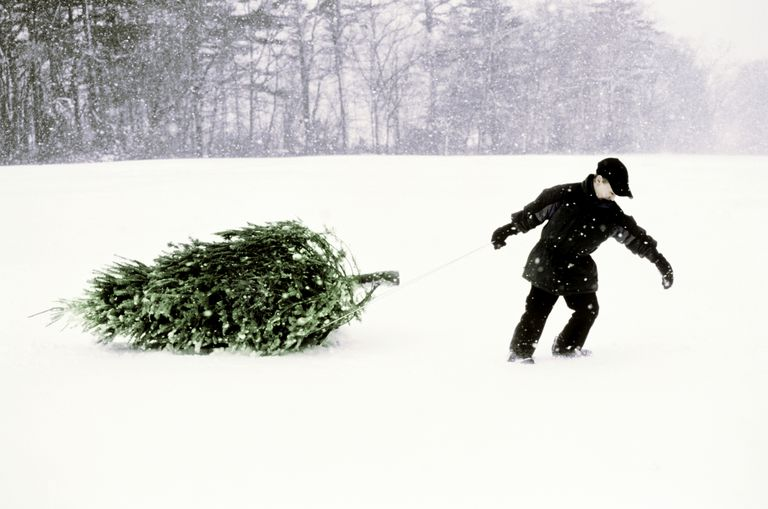 Boy Pulling Christmas Tree