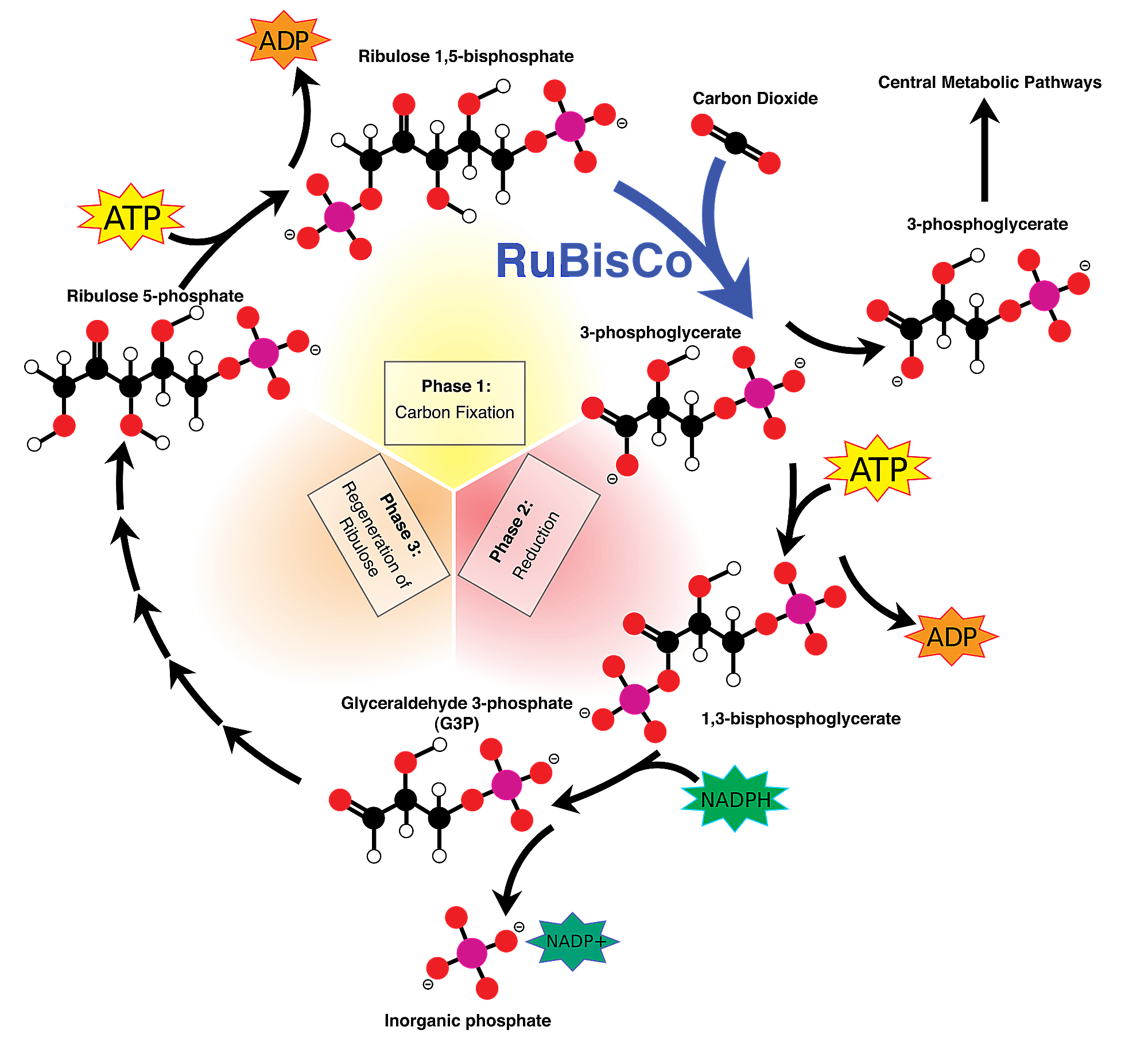 This is a diagram of the Calvin Cycle.
