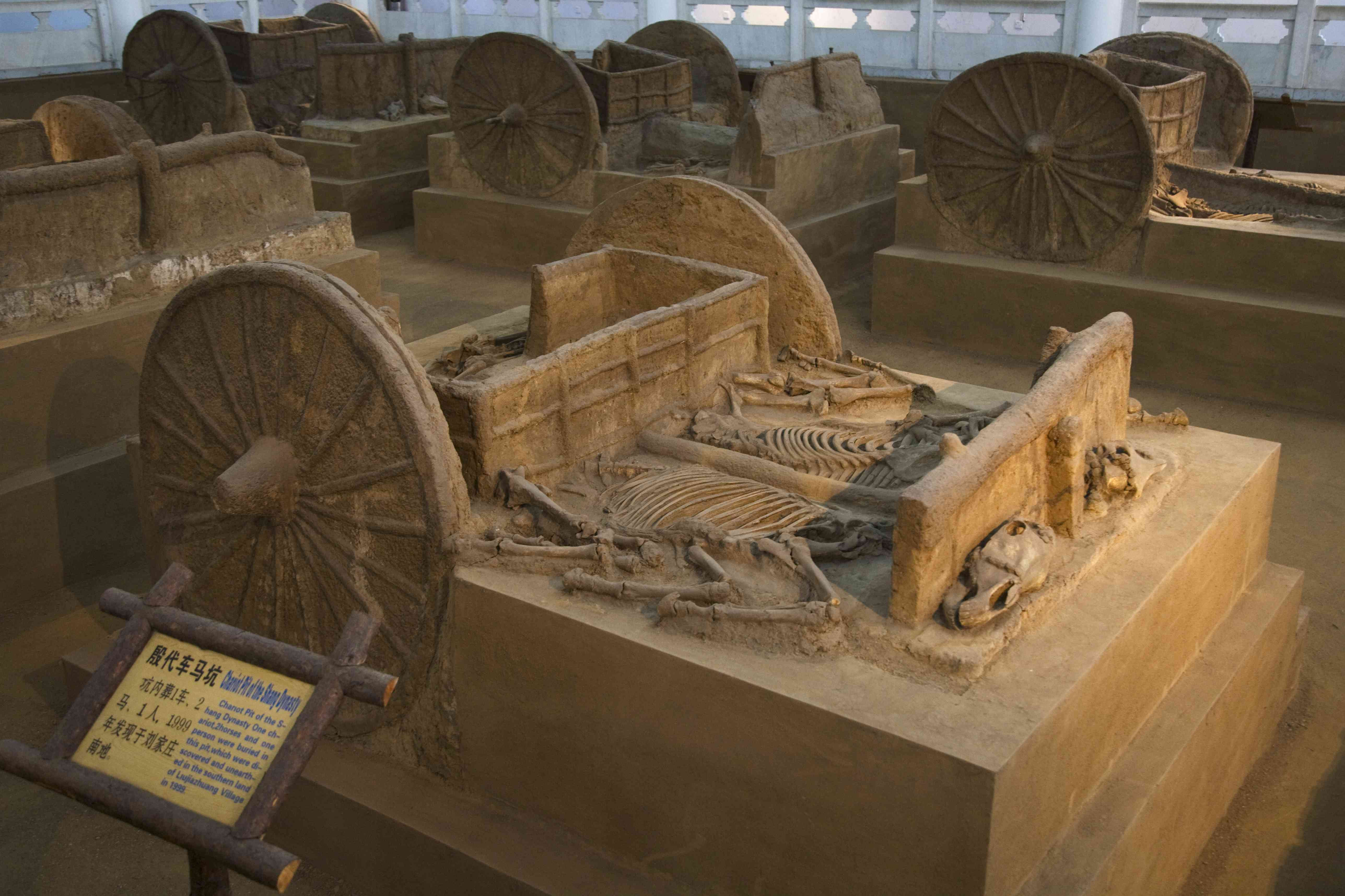 China, Henan Province, Anyang, Yinxu Museum, chariot excavated from Yinxu, the ruins of the Shang dynasty dating back to 4000 years ago
