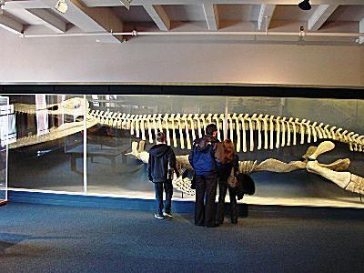Harvard University Museum of Natural History