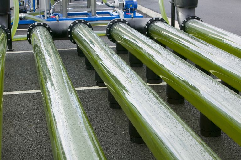 An AlgaeLink Algae growing system, harvested to make ethanol and biodiesel.