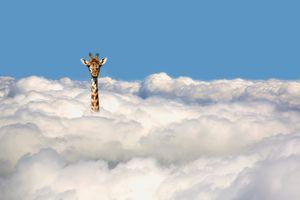 giraffe in the clouds