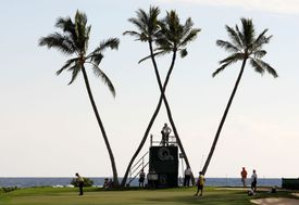 palm trees in the shape of a W