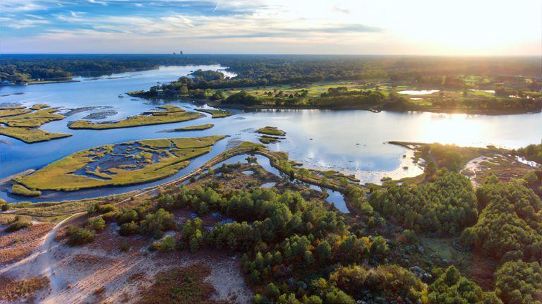 tidal estuary and wetlands ecosystem