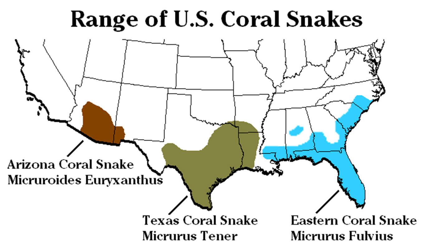 Coral snake species and range in the United States