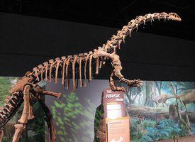 jingshanosaurus