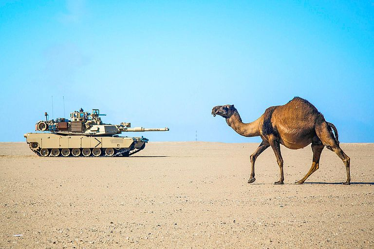camel and tank