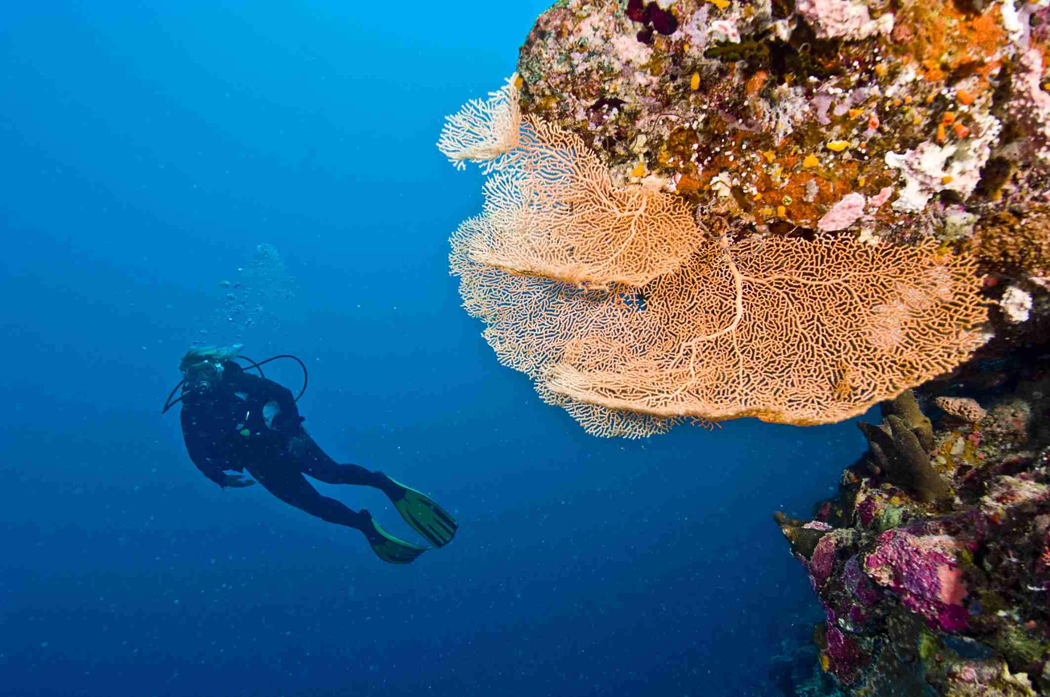 Scuba Diving Basics Skills And Techniques