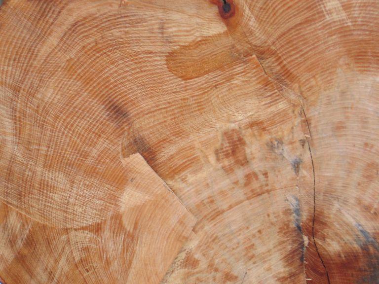 Tree rings - 100 year old Beech Tree