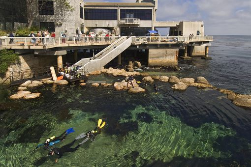 Novice divers expore man made tidal pool, Monterey Bay Aquarium