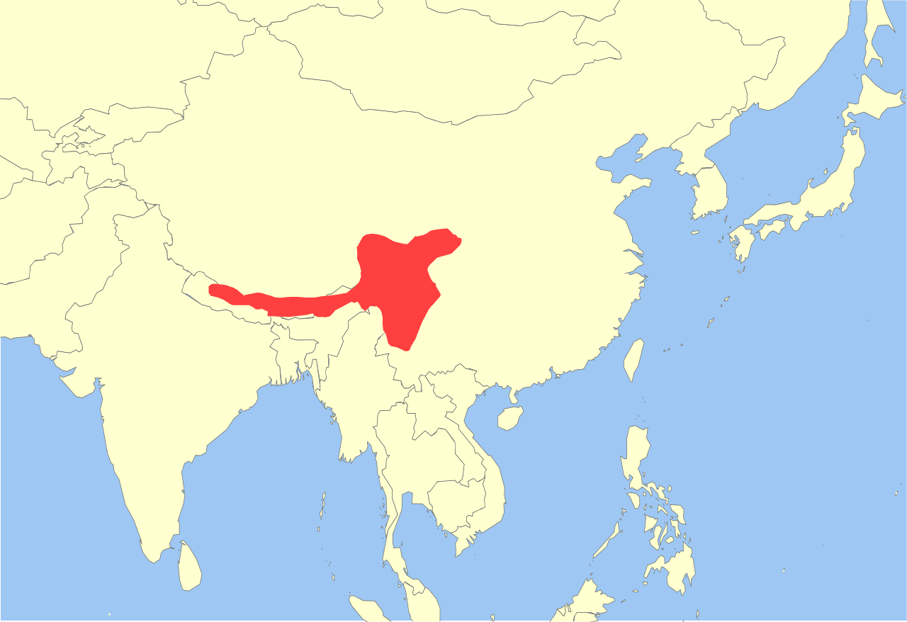 Red Panda Global Distribution