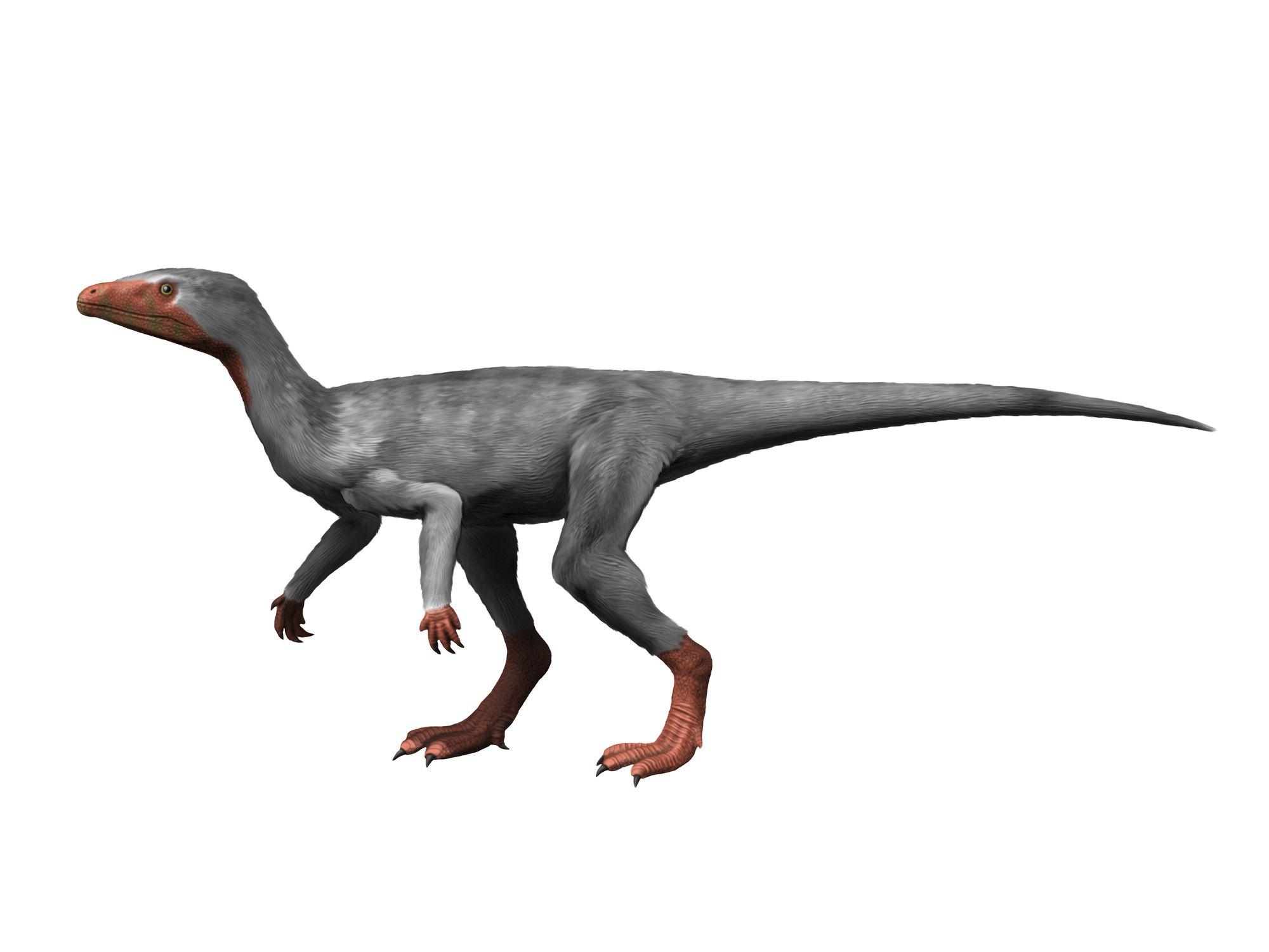 eoraptor body