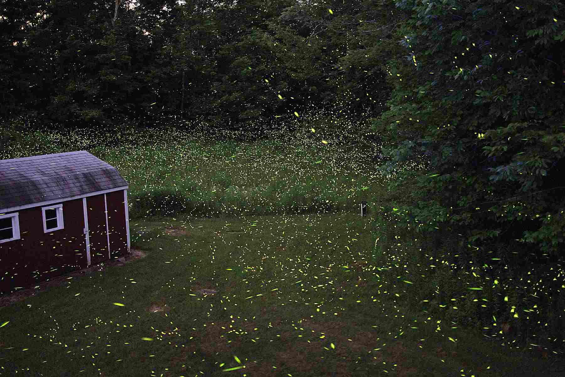 Fireflies flashing at dusk.