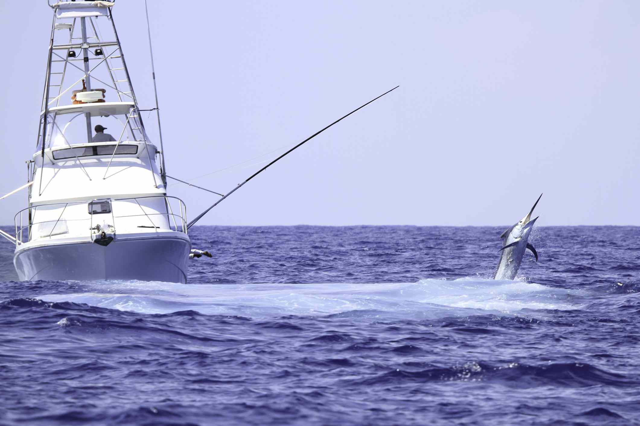 Charter fishing boat fighting a blue marlin