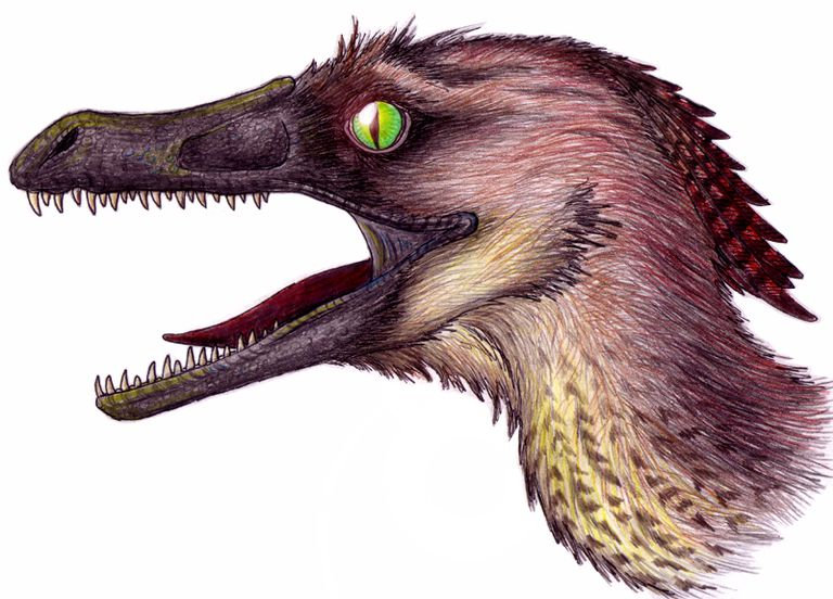 how was velociraptor discovered