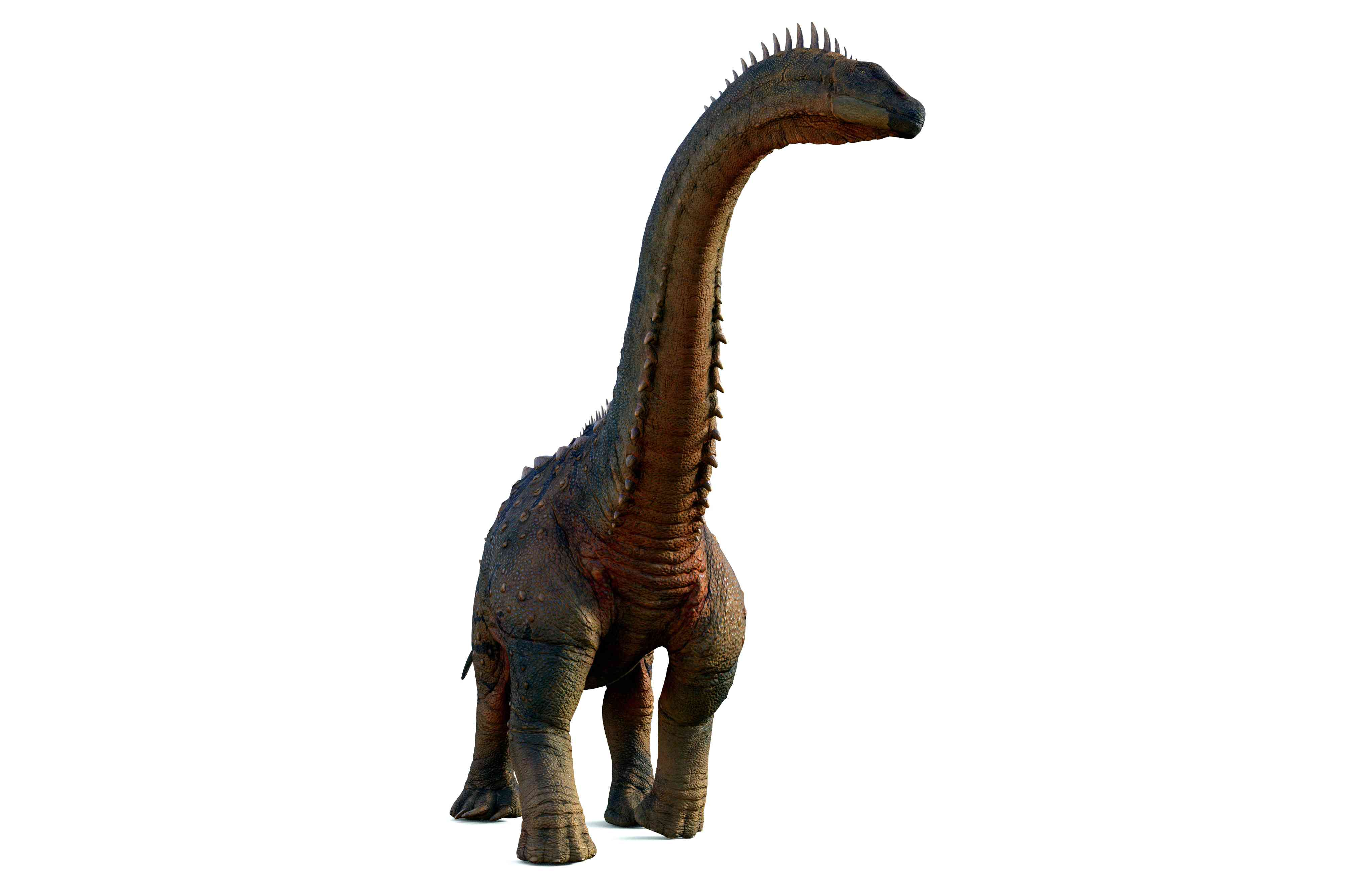 Alamosaurs rendered in 3D