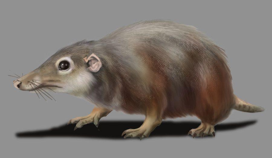 adelobasileus