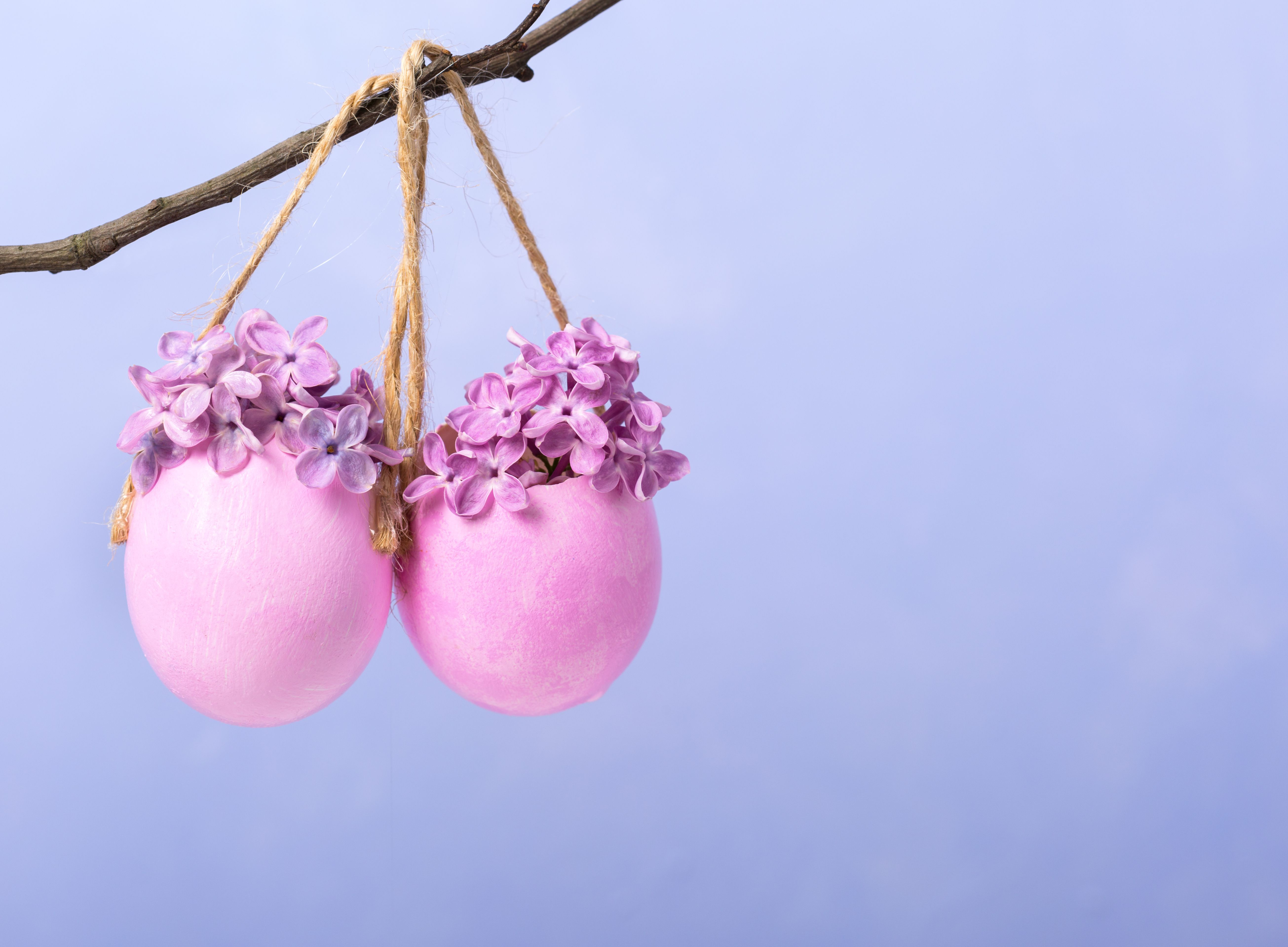 Lilac flowers (Syringa) in eggs shell. Easter decor