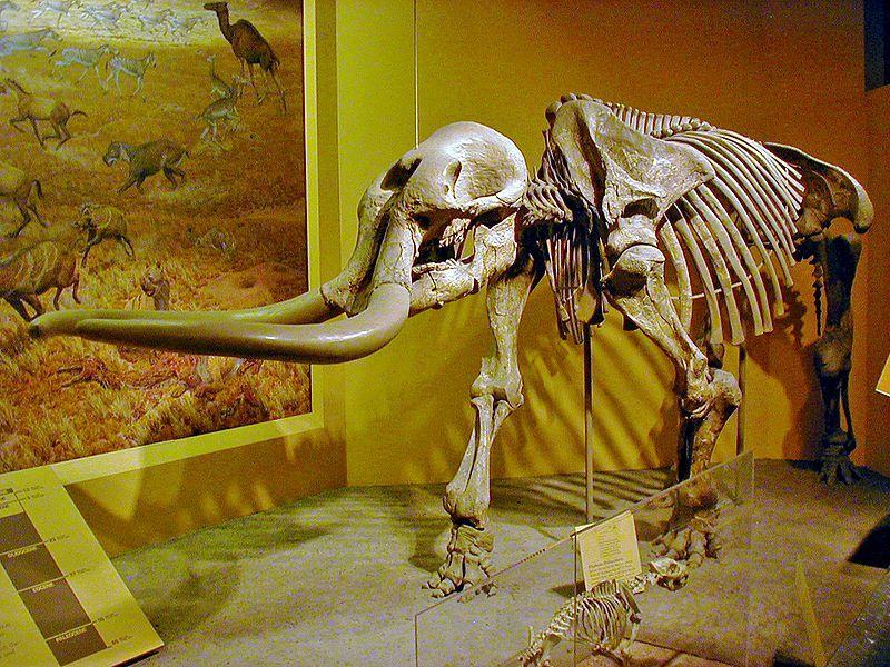 stegomastodon