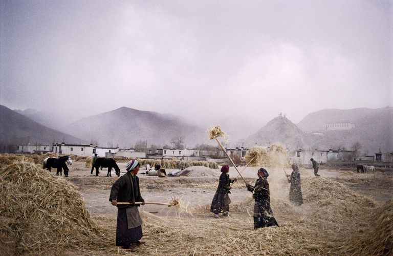 Tibet, Dongsa Village, farmers sifting wheat in field