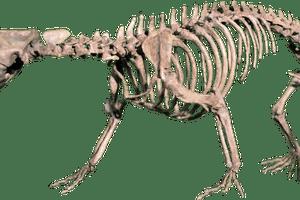 didelphodon