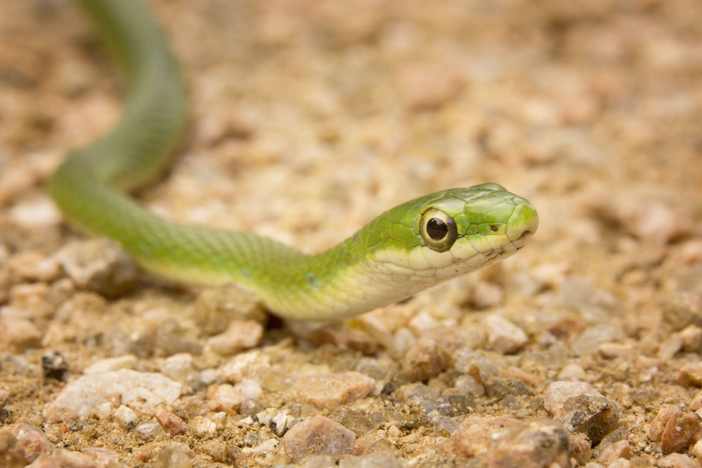 Understanding Reptile Diet Variation