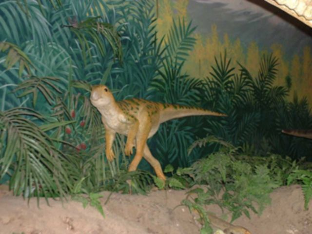 A model of the <i>Leaellynasaura</i> just outside Canberra in the Australia National Dinosaur Museum in Nicholls