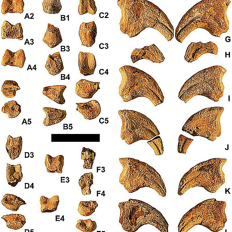 martharaptor