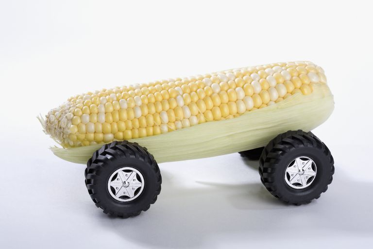 An ear of sweet corn with wheels on a white background.