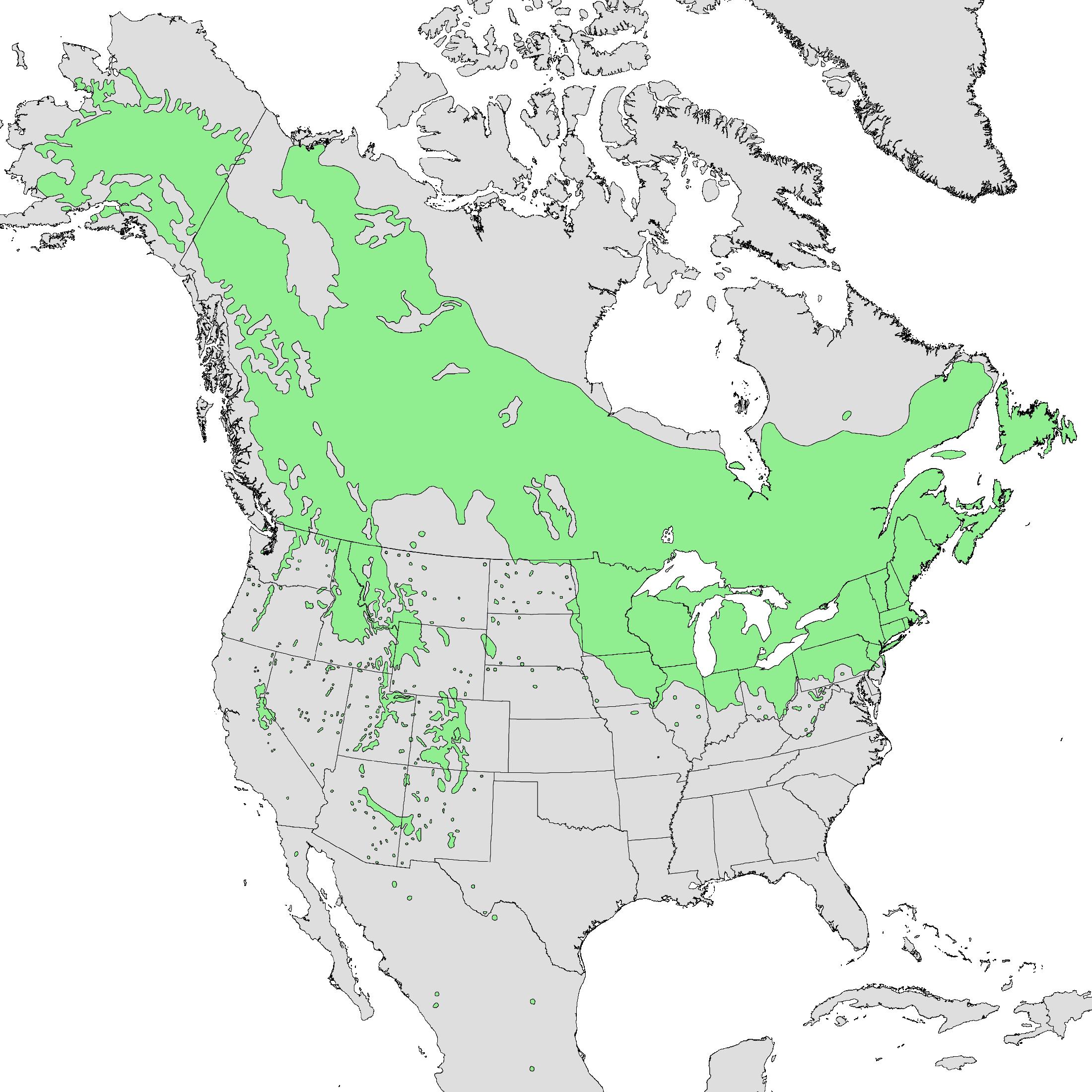 北米におけるアスペンの木の分布図