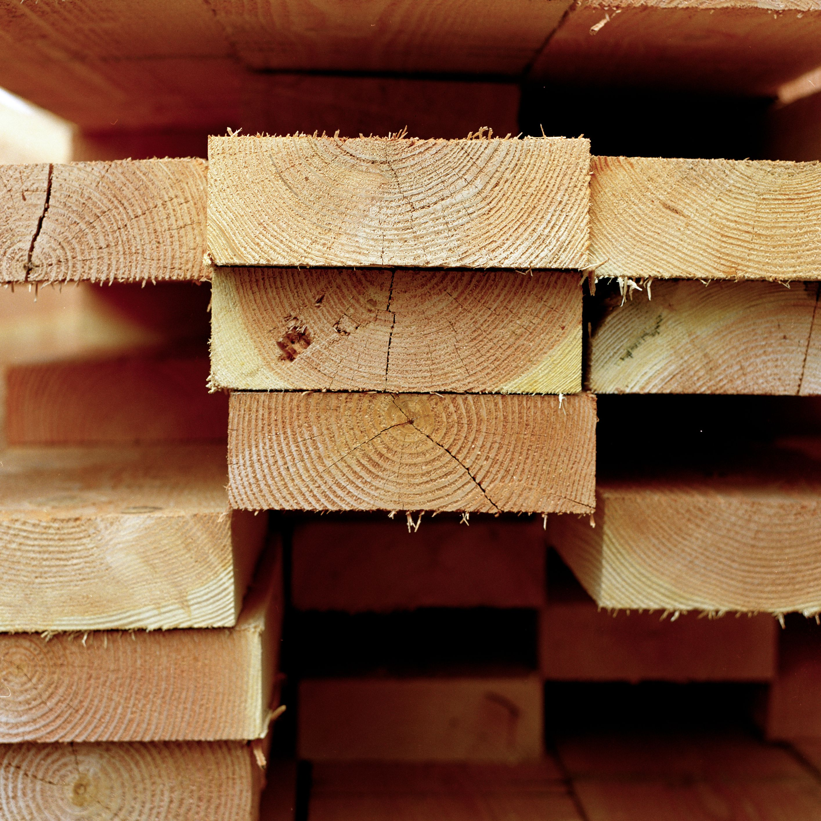 How to Sell Trees for Timber