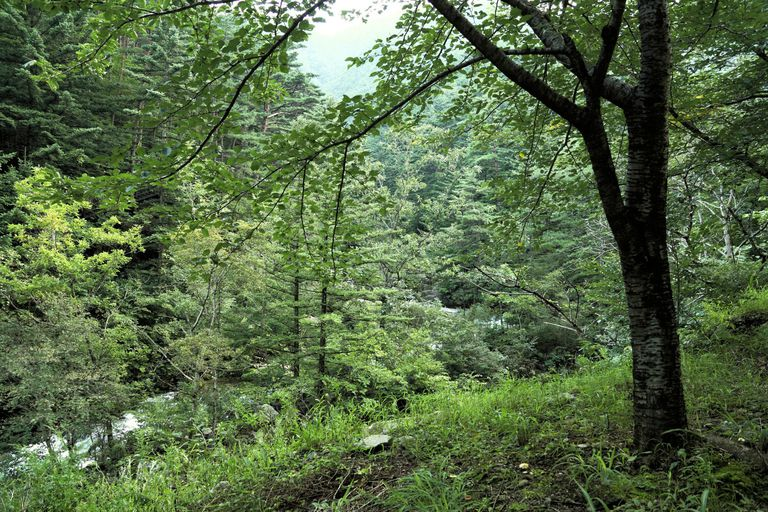 Arbor Day Inside primeval mountain forest,...