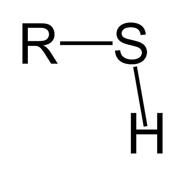 The formula for the thiol or sulfhydryl functional group is RSH.