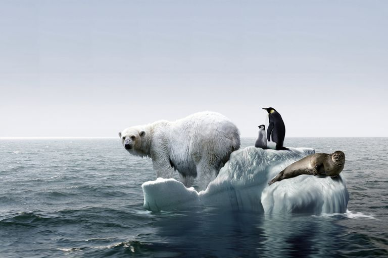 Polar Bear, Penguins and Seal on a Small Island of Ice