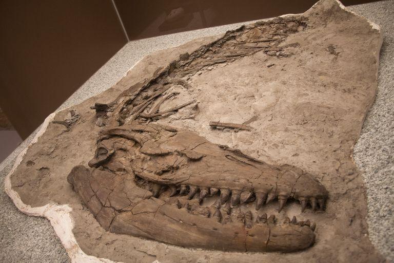 proganthodon fossil