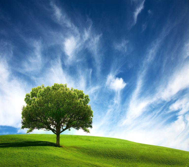 Old Tree on green field