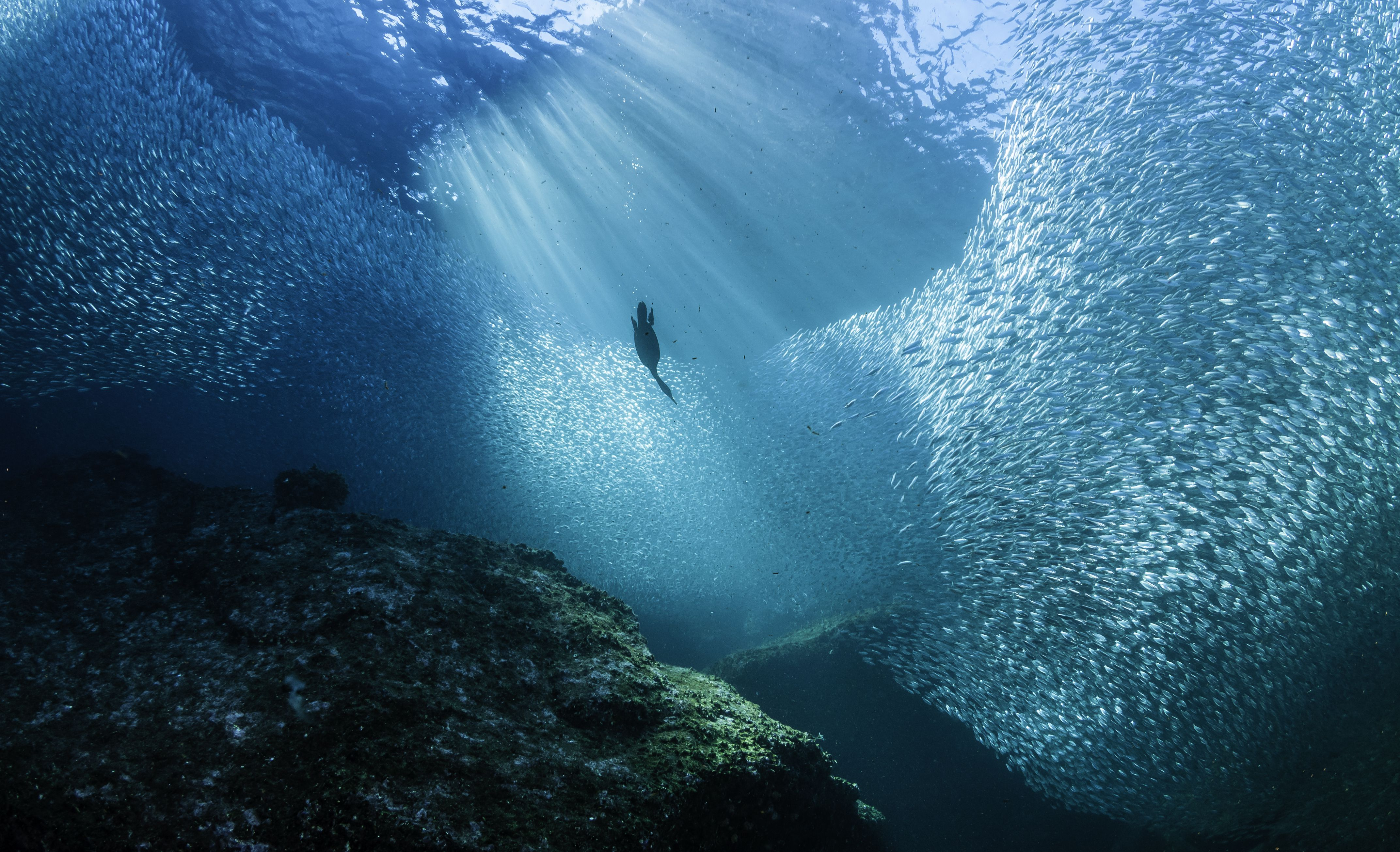 10 threats to ocean life