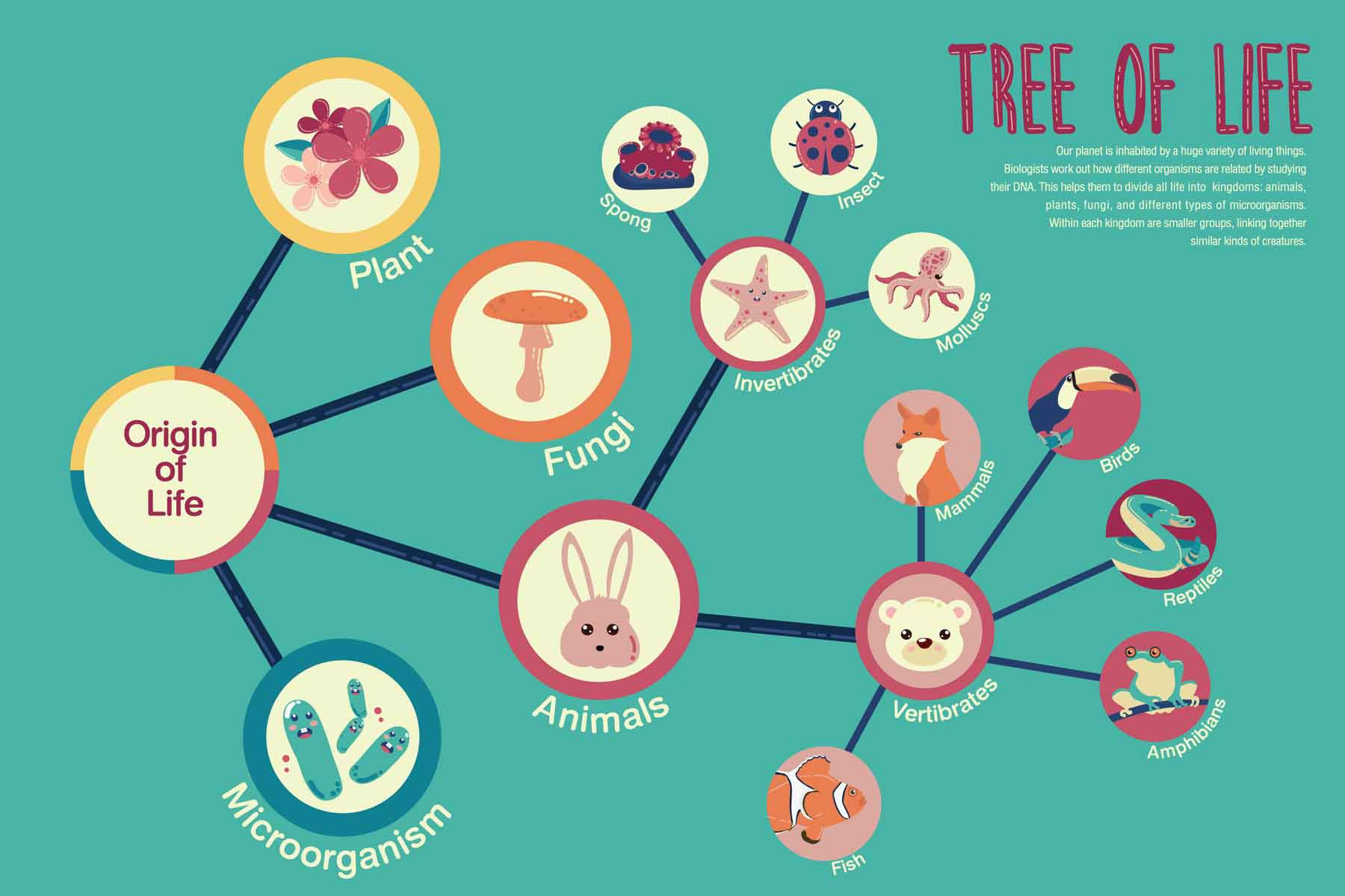 A phylogenetic tree of life.