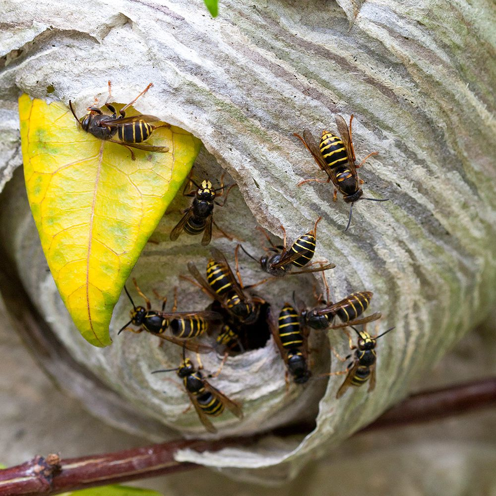 What Do Wasps Do, And Why Do We Need Them?