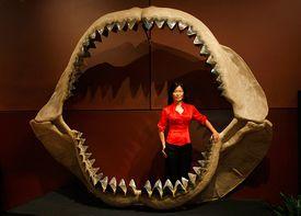 Enya Kim standing in the jaws of a prehistoric shark Carcharodon megalodon