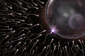 Sperm and Eggs are gametes