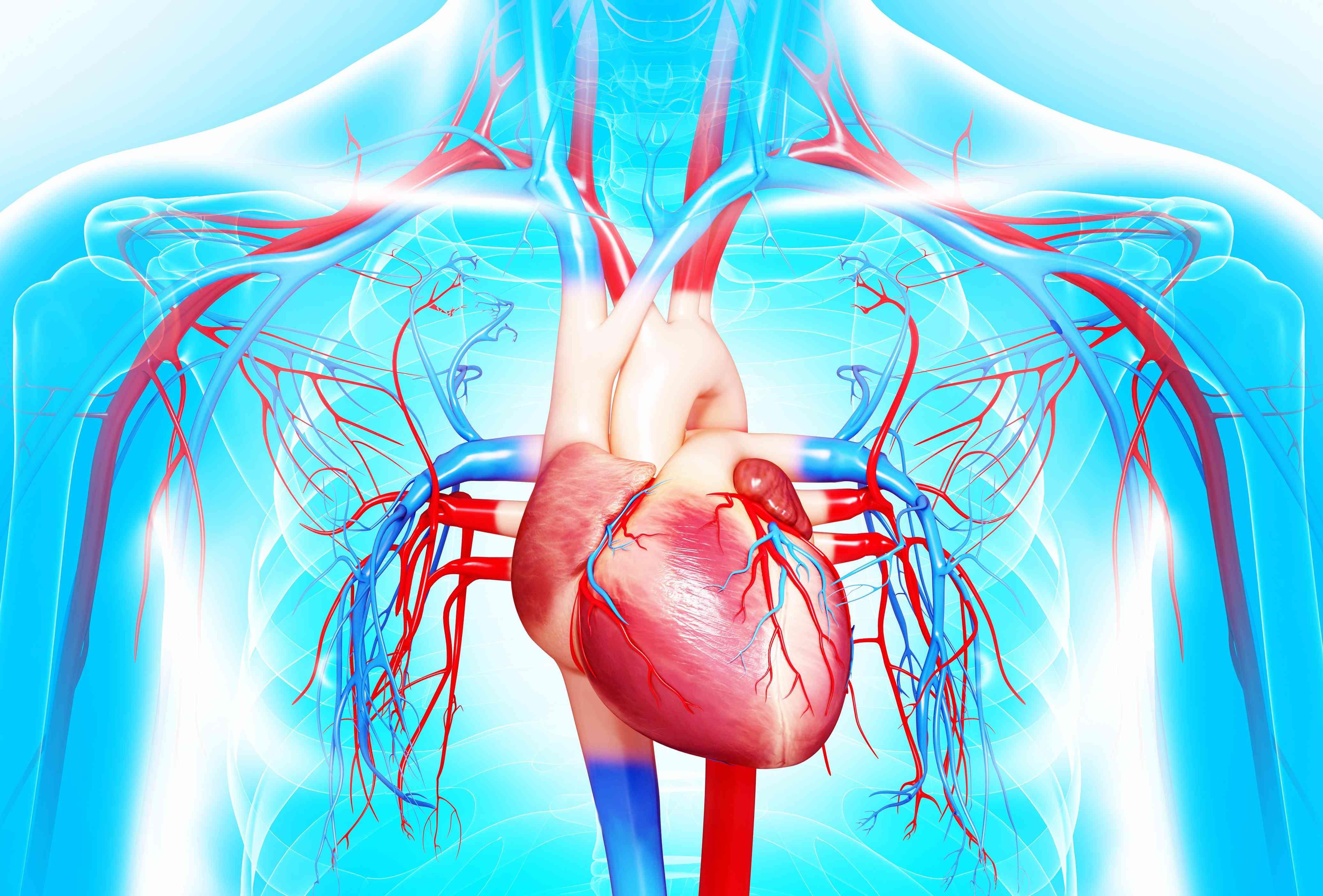 influența varicoasă asupra inimii ce face boala varicozei